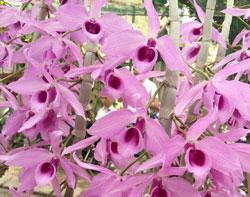Các loại hoa lan hot tháng 10