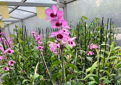 hình ảnh hoa lan trầm cửu long