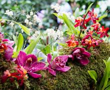 Tên hoa lan việt nam