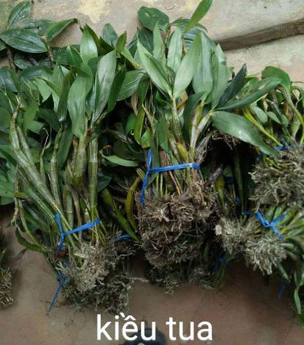 lan rừng tp hcm tháng 10 - 5