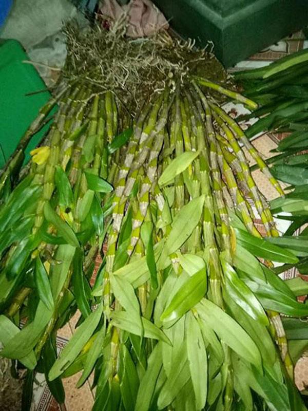 hoa lan rừng tây bắc 1