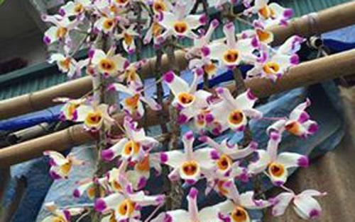 hình hoa u lồi