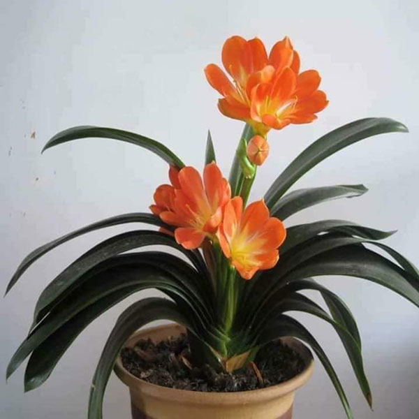 hoa lan quân tử 2