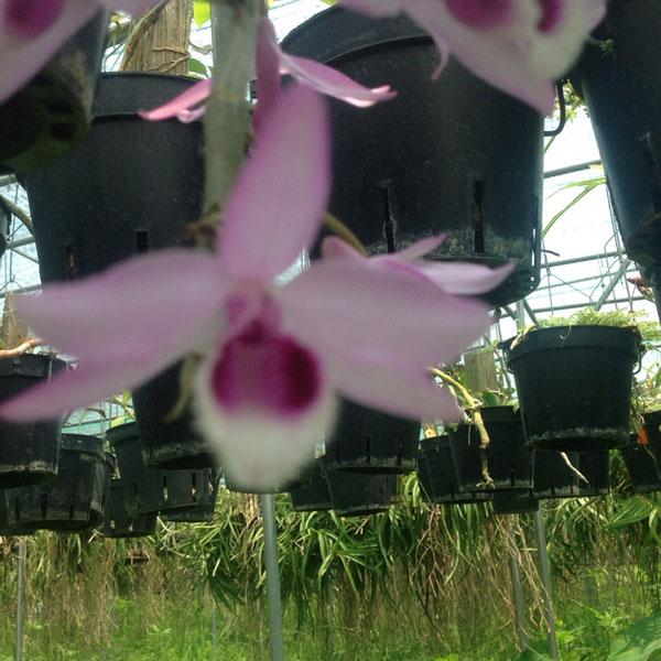 nestor hình hoa 2