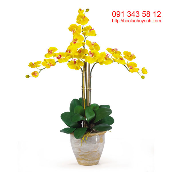 hoa lan chúc mứng hồ điệp 9