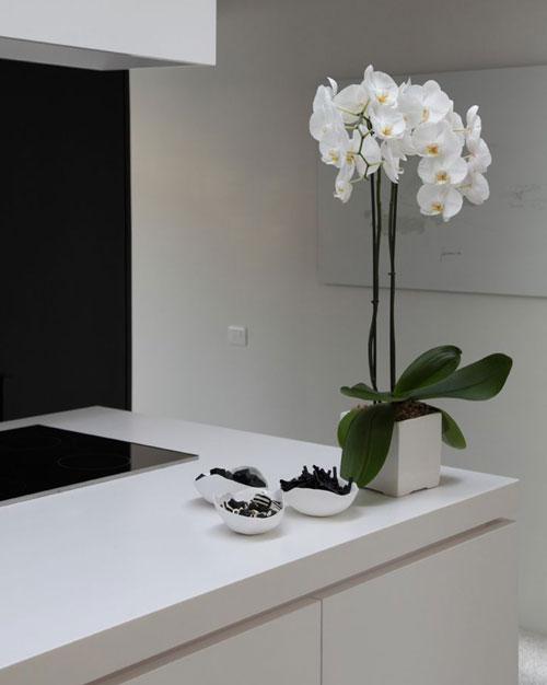 trang trí showroom nội thất bằng lan hồ điệp 11