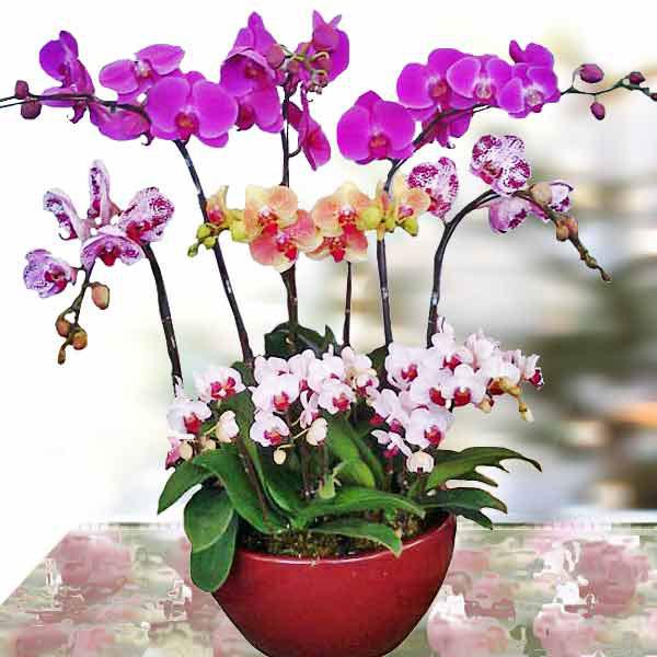 100+ hình ảnh hoa lan chúc mừng sinh nhật - hinhanhsieudep.net