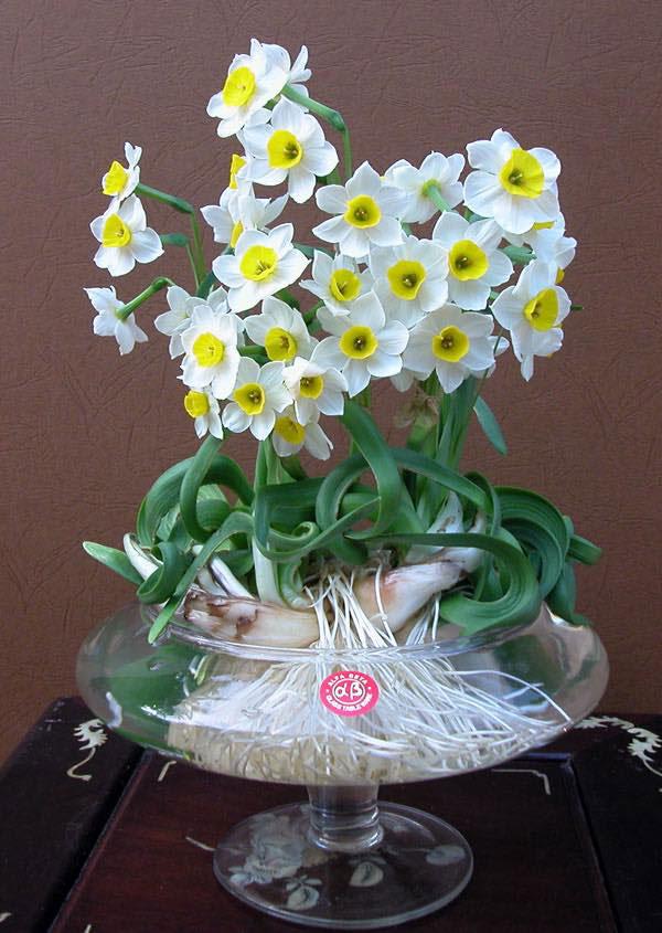 hoa thủy tiên đẹp 4