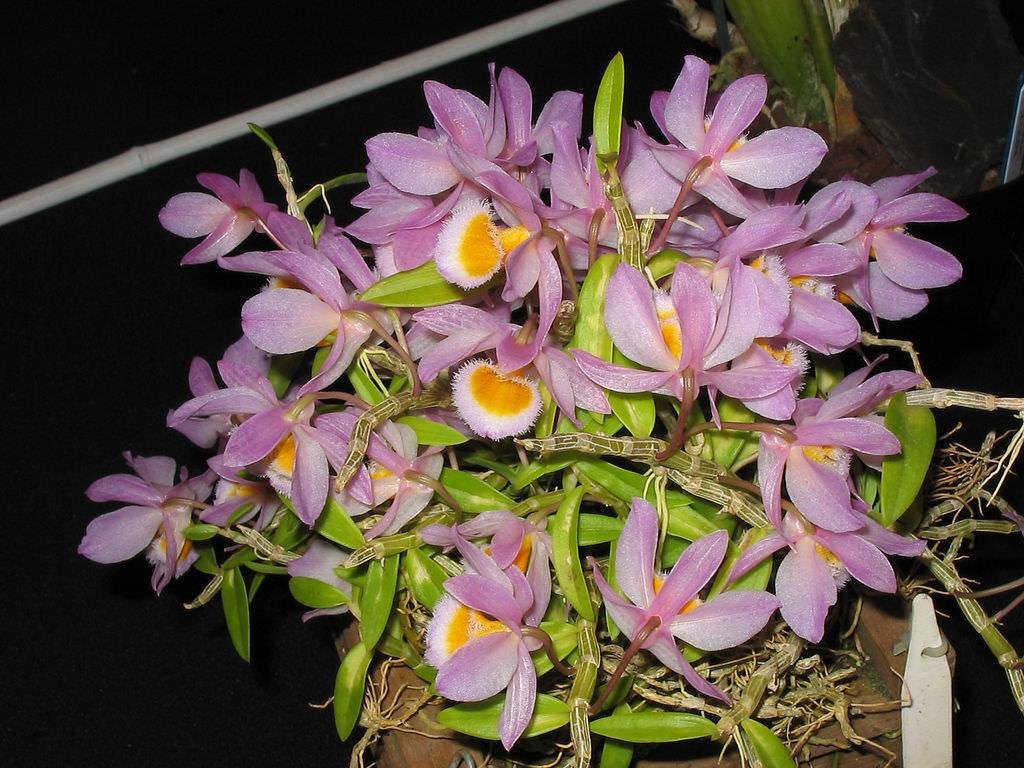 hoa nghệ tâm