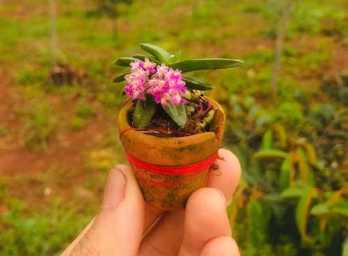 hoa lan trứng bướm, nhỏ xíu nhưng cực xinh
