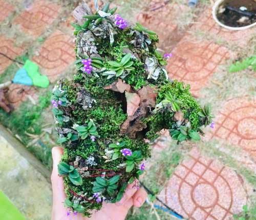 tác phầm ghép gỗ lan trứng bướm