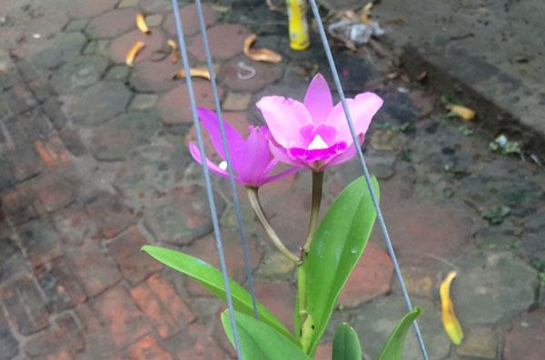 hình hoa lan cát mini 2