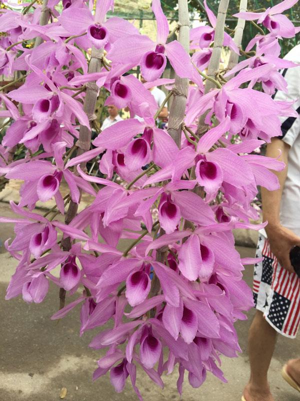 hình hoa hawai hồng