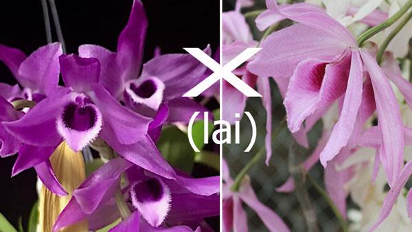 hình hoa tham khảo