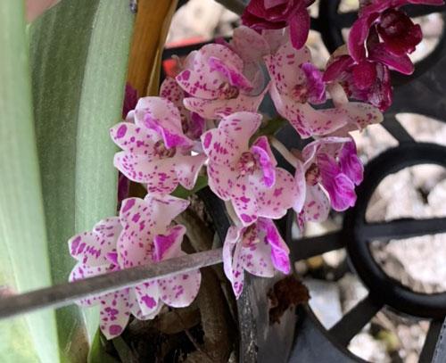 hình hoa đai châu thái 5