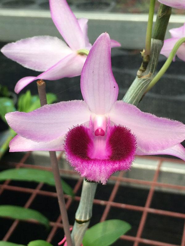 hình hoa siêu trầm 4