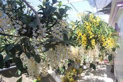 Người trẻ tuổi trồng hoa lan