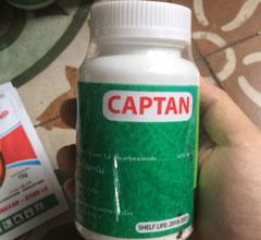CAPTAN Thuốc đặc trị thối nhũn dành riêng cho hoa lan